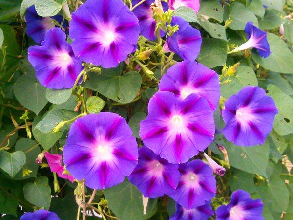 Декоративные вязаные цветы в горшках