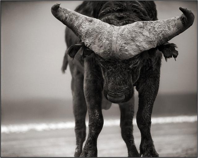 Nick Brandt   °•★ ★•°  Великолепные фото животных  °•★ ★•°
