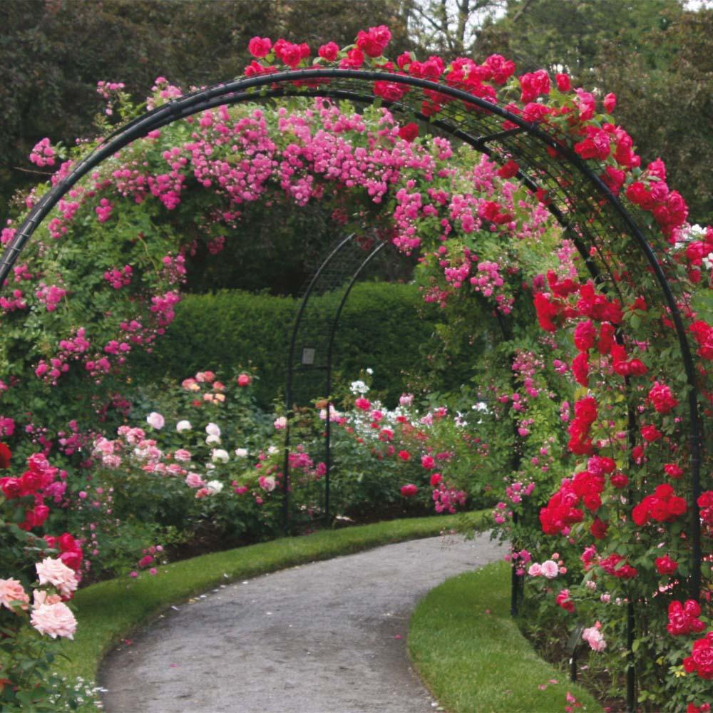 Цветы в саду своими руками
