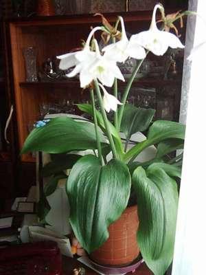 Комнатные цветы для чайника комнатные