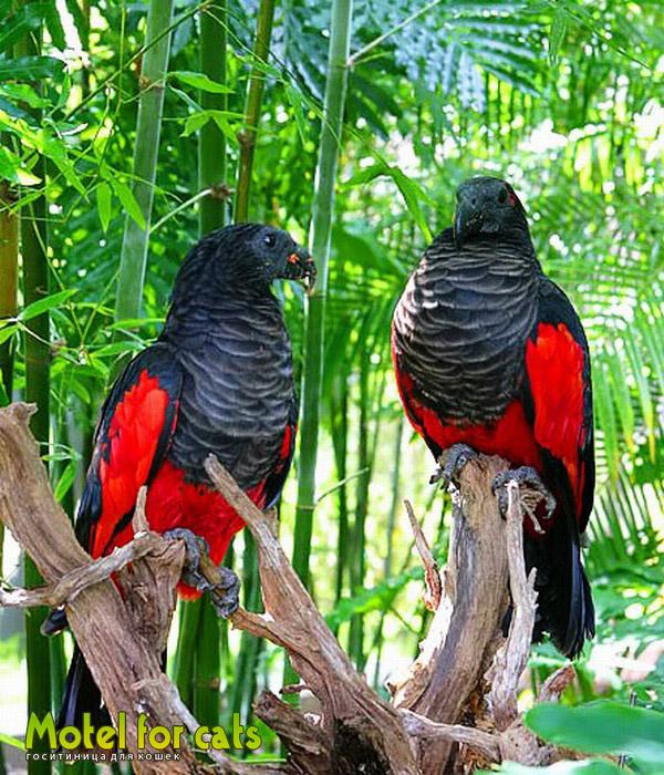 схема вышивка крестом попугая